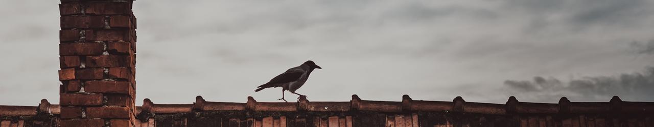 Orange Raven Blog