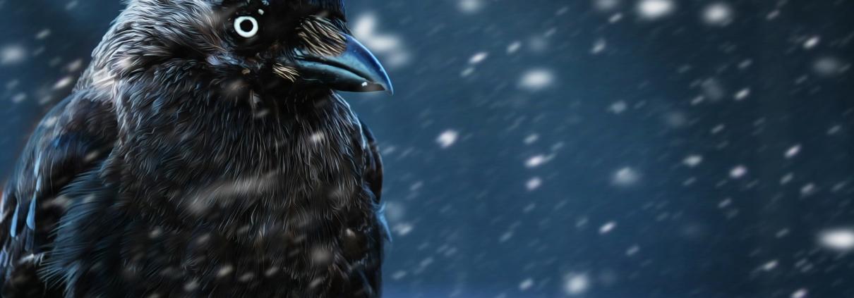 Winterpause Orange Raven